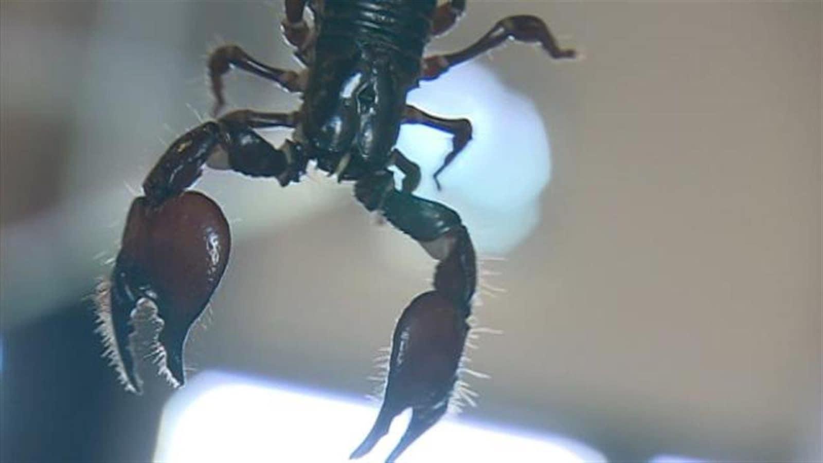 Un scorpion.