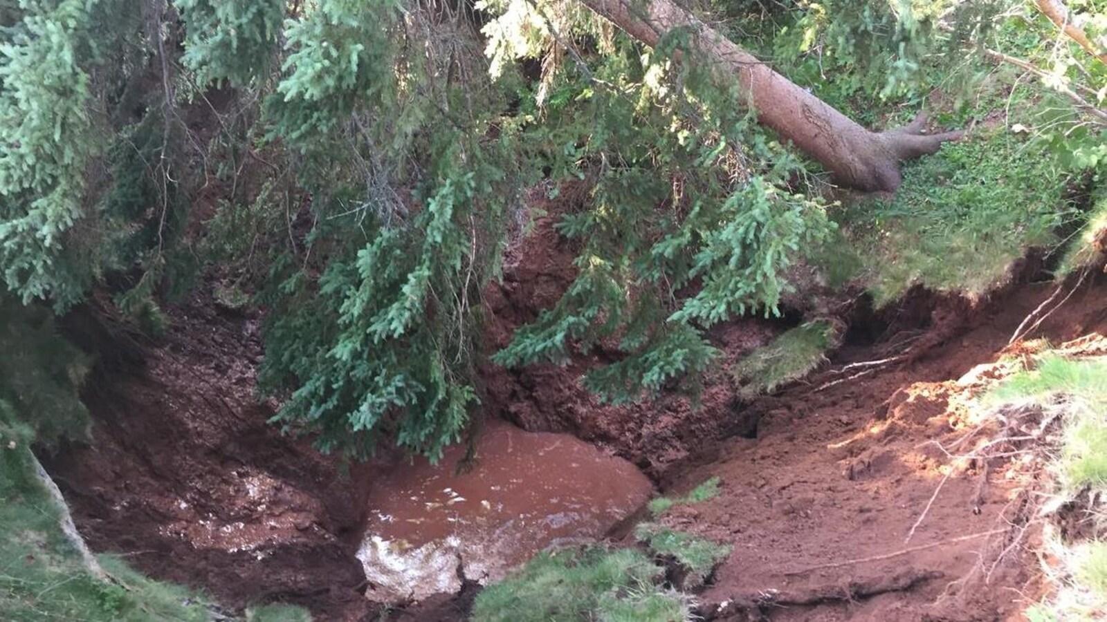 Un arbre déraciné menace de tomber dans une doline à Oxford, en Nouvelle-Écosse, en août 2018.