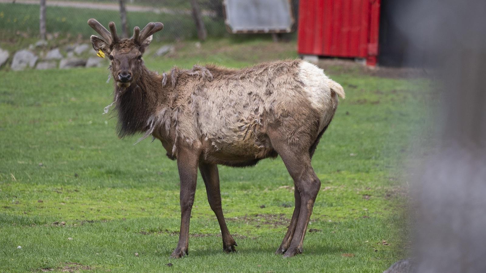 Intervention du SPCA pour s'occuper des animaux au zoo de  Saint-Edouard-de-Maskinongé. Plusieurs animaux sont toujours sur place.