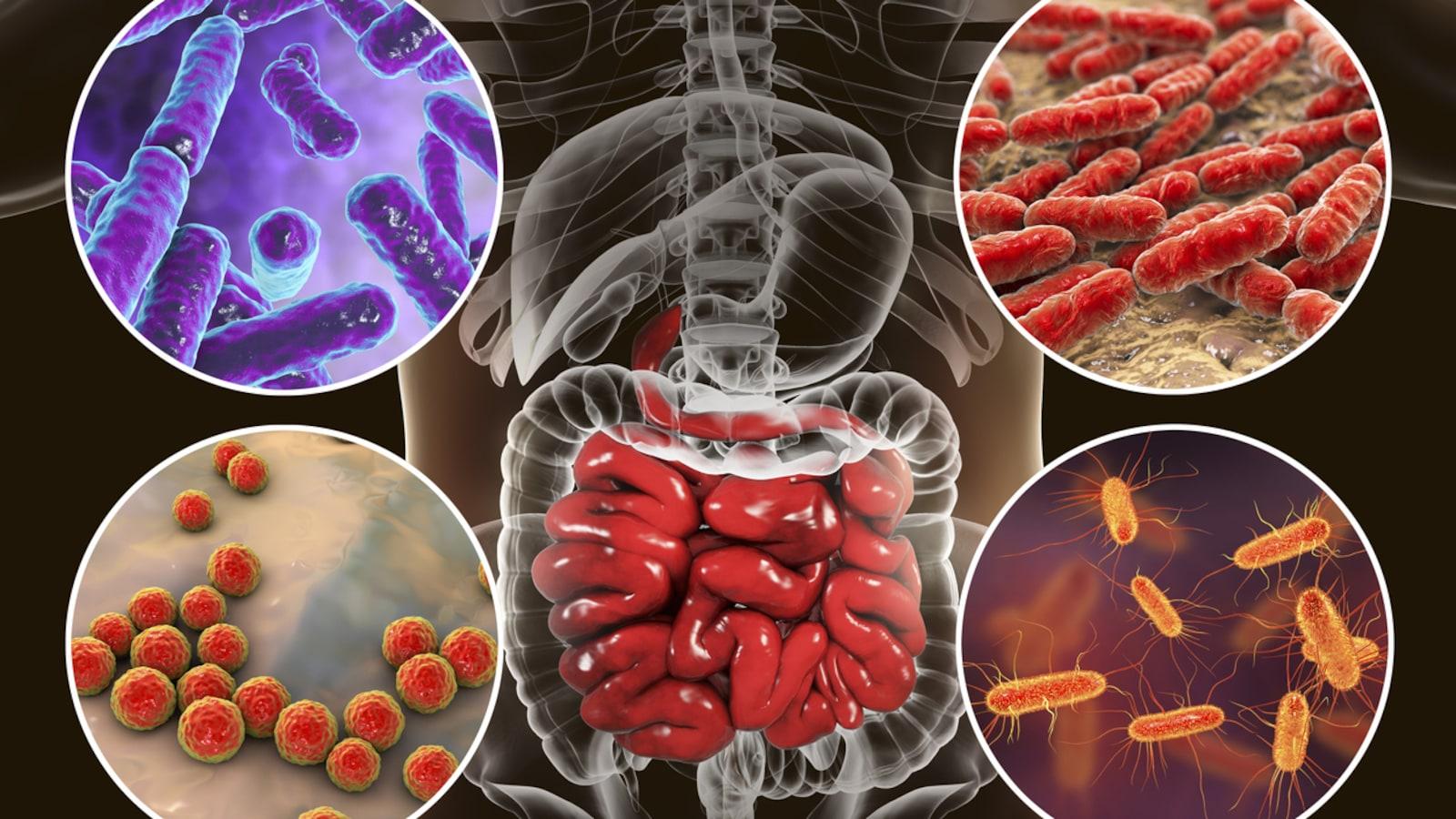 Illustration numérique des bactéries différentes peuplant le microbiome humain.
