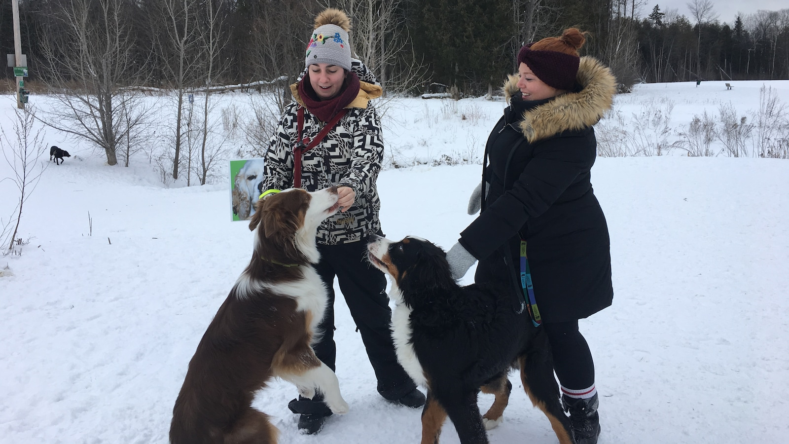 Deux jeunes femmes tiennent en laisse un chien chacune, dans un parc enneigé.