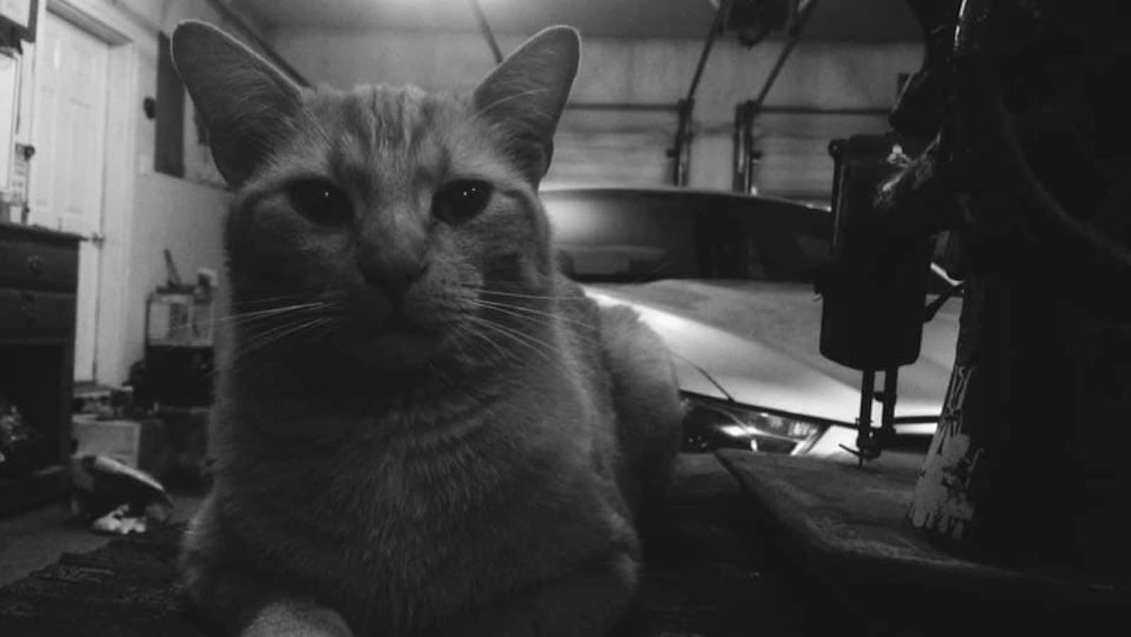 Une photo d'un chat dans un garage