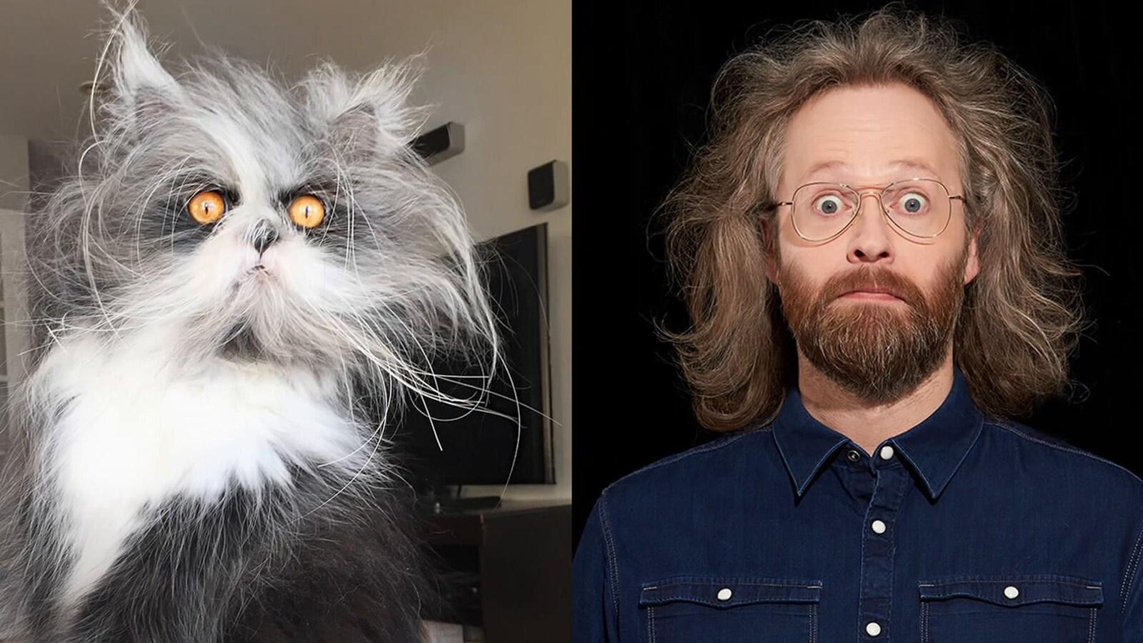 Le chat Atchoum affiche un poil hirsute et des yeux étonnés, qui ne sont pas sans rappeler l'humoriste.