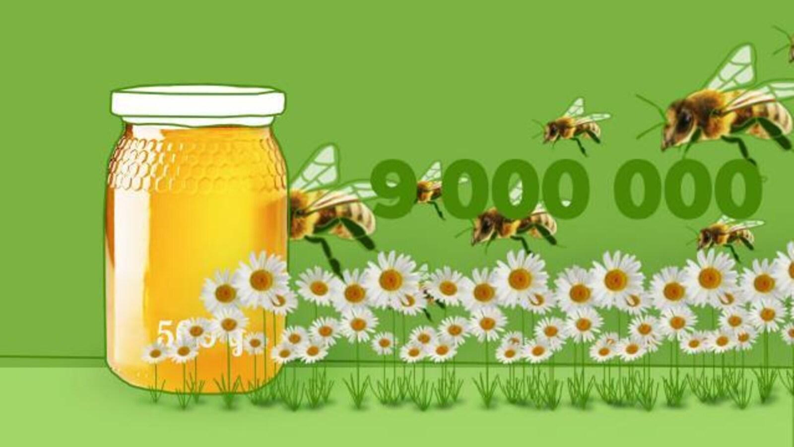 Combien faut-il d'abeilles pour produire un pot de miel?