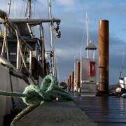 des nateaux de pêche amarrés au port.