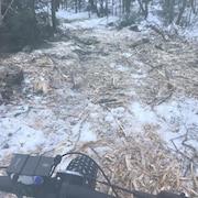 Des arbres coupés dans une forêt.