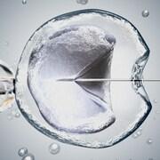 Illustration d'une image au microscope d'une fécondation in vitro.