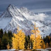 Des montagnes imposantes, enneigées derrière des arbres verts et jaunes.