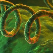 Photo d'une bactérie.