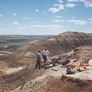 Site d'excavation d'un squelette de dinosaure en Alberta