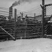 Des prisonniers allemands derrière des barbelés.
