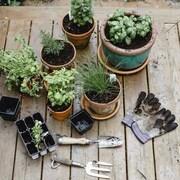 Des plantes et fines herbes en pot ainsi que des outils de jardinage à l'extérieur sur un patio.