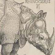 Gravure d'Albrecht Dürer (1515) utilisée pour le matériel promotionnel du Parti rhinocéros