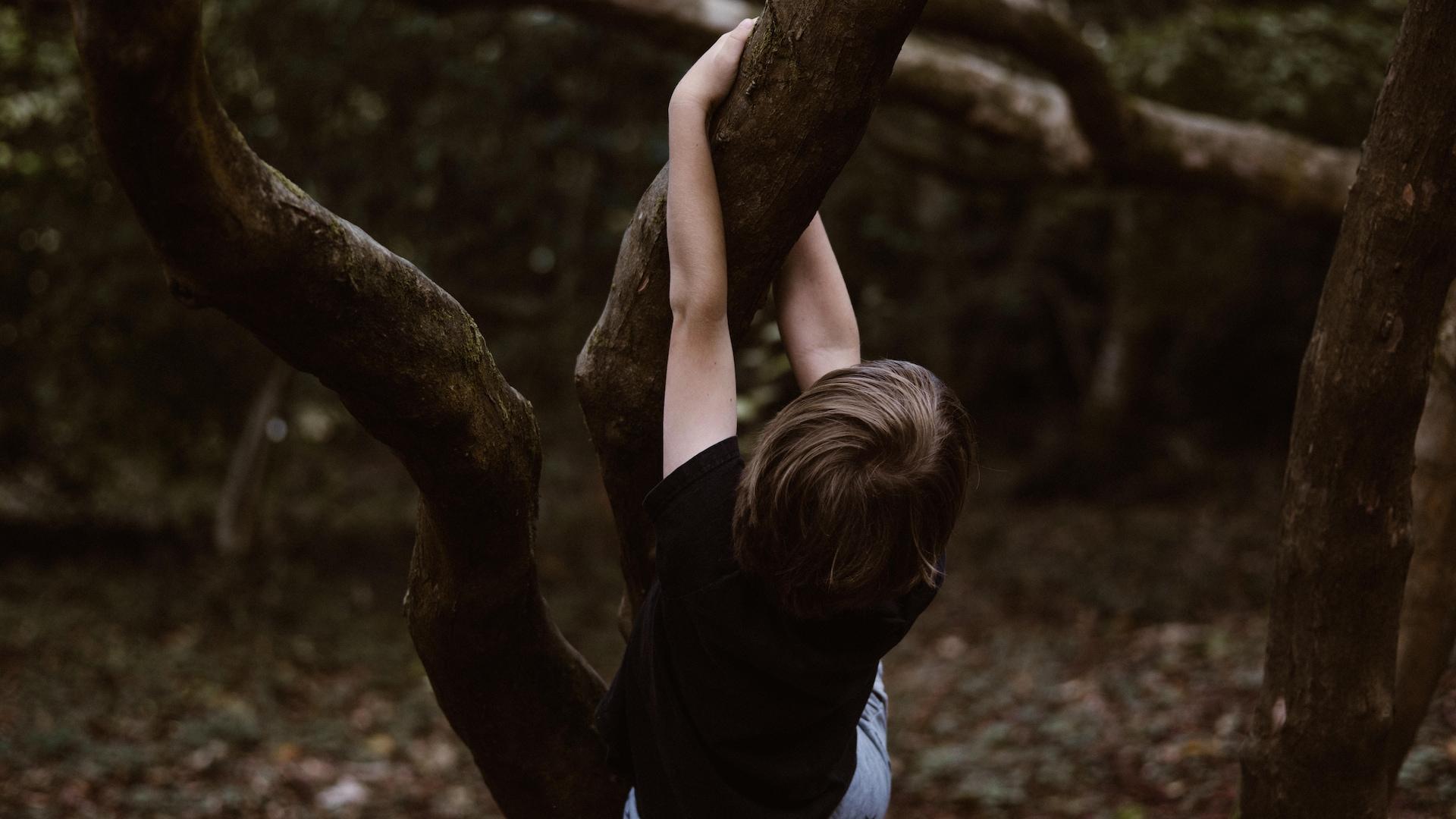 Un enfant joue dans les arbres en forêt.