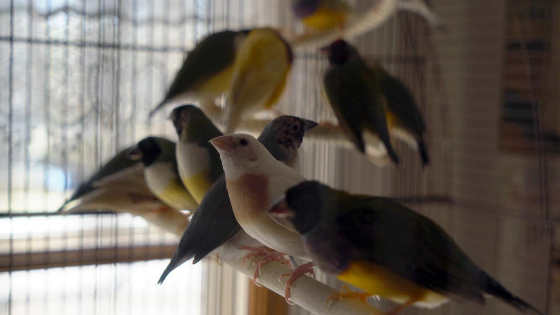 Les oiseaux sont présents à l'entrée du gîte.