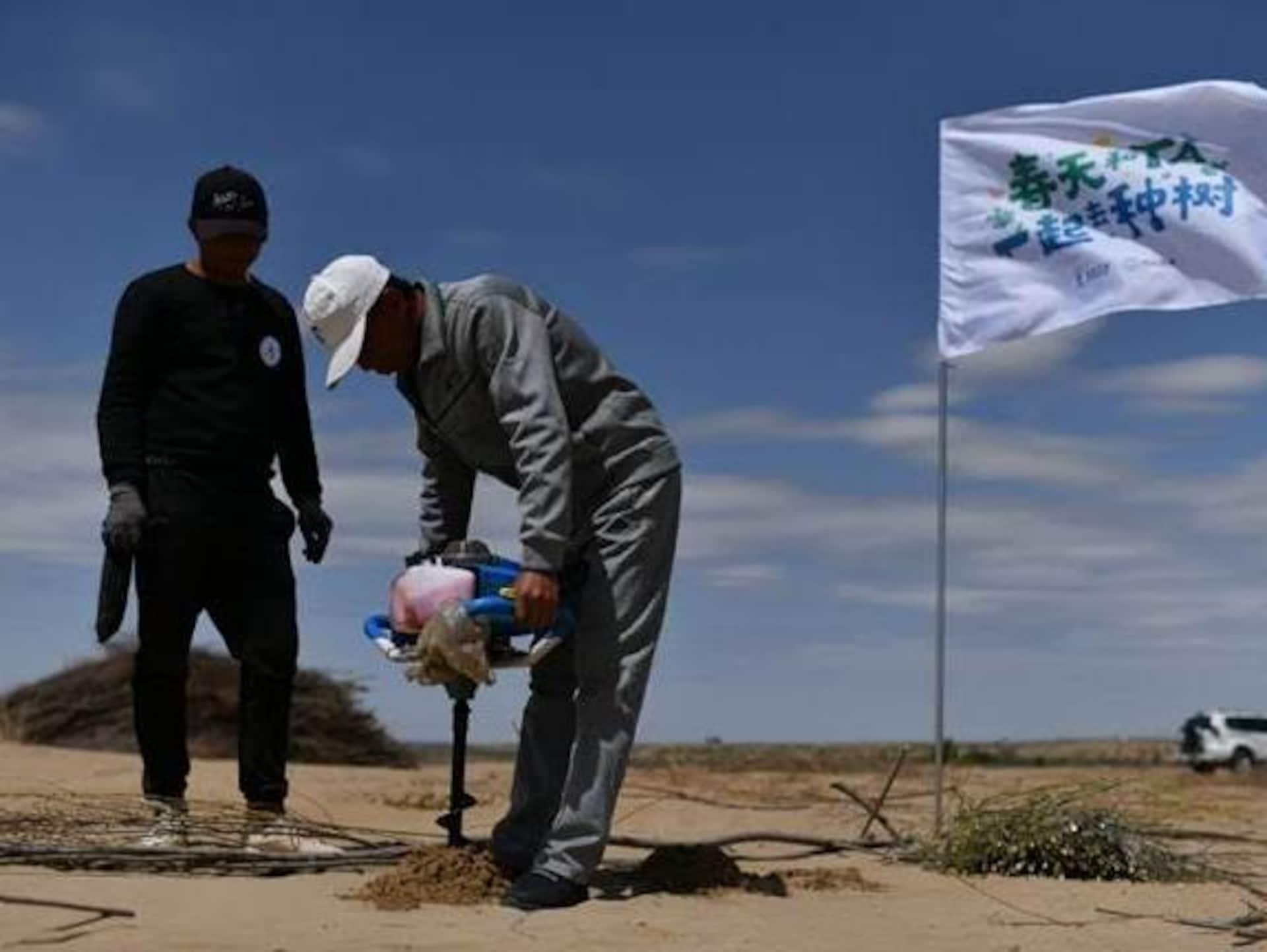 Plantation d'arbres achetés grâce à la finance verte en Chine.