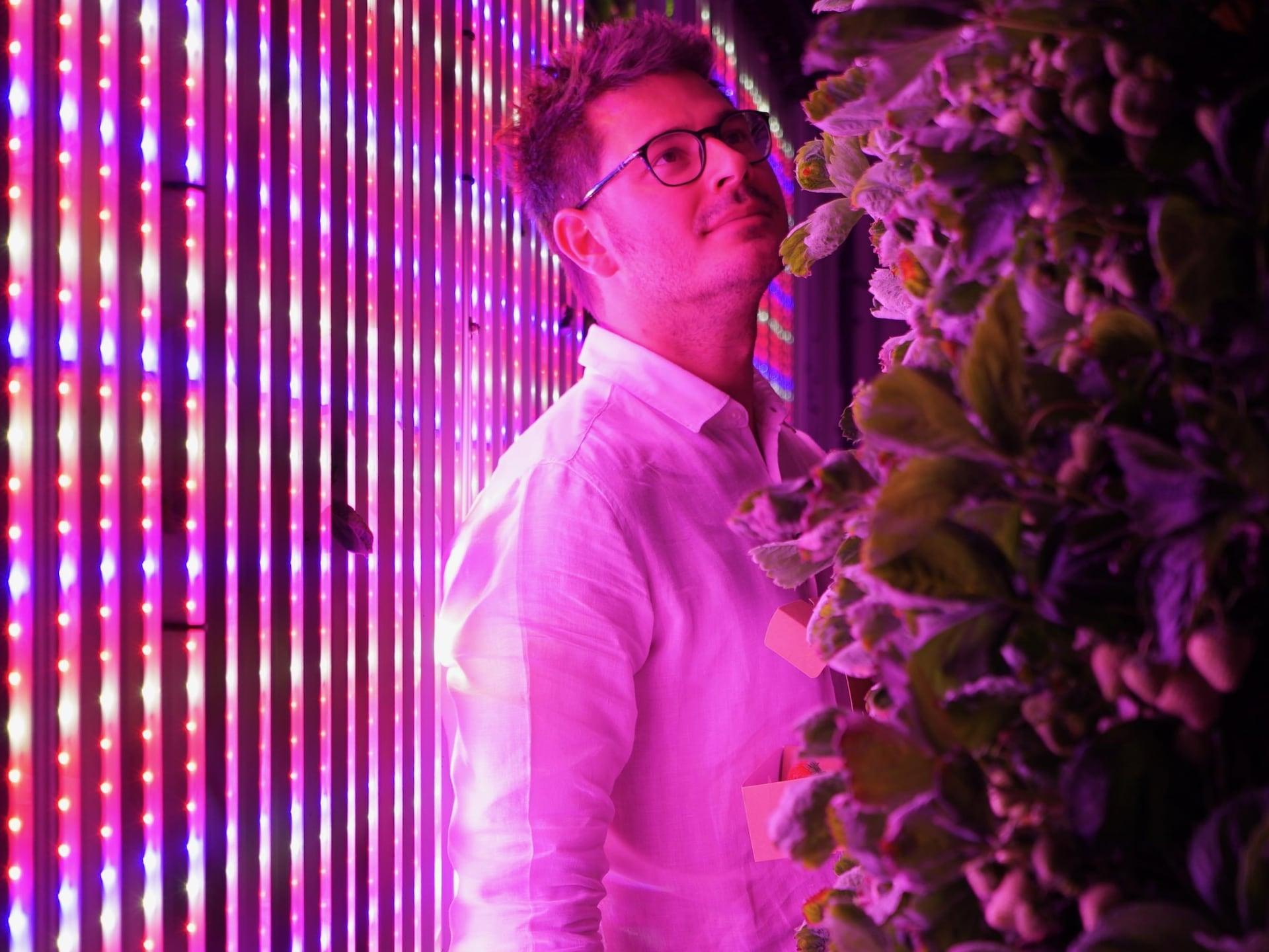 Georges Beaudoin se tient entre un mur de lumières leds multicolores et de plants de fraises verticaux.