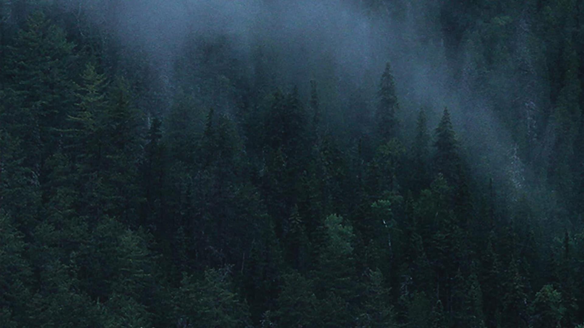 Photo d'un paysage de forêt de sapins dans la brume