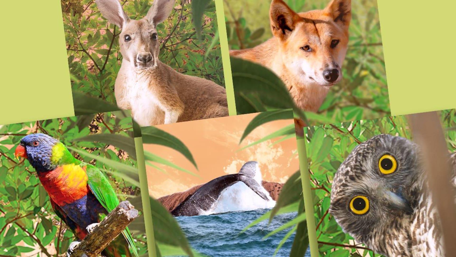 Un kangourou, un perroquet, un hibou, un orque et un renard