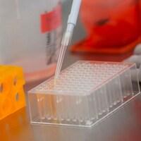 Des échantillons de protéines sur un comptoir.