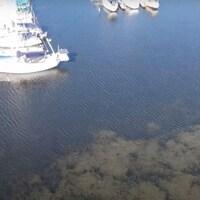 Capture d'écran d'un vidéo de drone survolant la baie Frenchman, à Pickering. On voit des bateaux dans la marina et des plants de myriophylle à épi.