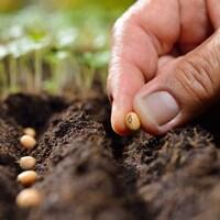 Une personne met une graine en terre.