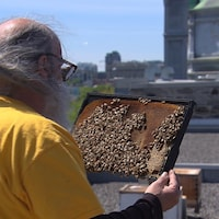 Un homme avec des abeilles