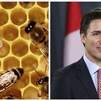 Justin Trudeau et les leaders de la planète interpellés pour sauver les abeilles.