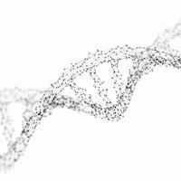 Un modèle de la structure à double-hélice de l'ADN humain.