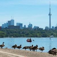 L'horizon de la ville de Toronto avec un couple en canot sur un lac et des bernaches sur la plage.