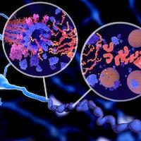 Illustration montrant la phosphorylation de la protéine tau qui entraîne la désintégration des microtubules et l'agrégation en enchevêtrements neurofibrillaires dans l'axone d'un neurone.