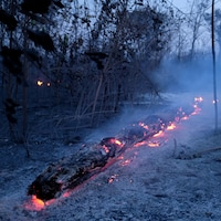 Des braises illuminent un tronc d'arbre effondré.