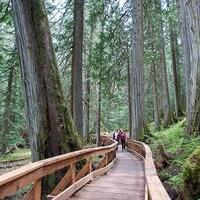 Un sentier en bois entouré de grands arbres.