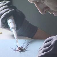 Un homme manipule une araignée dans un laboratoire.