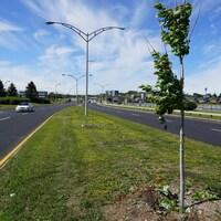 Des arbres sont coupés sur le terre-plein du boulevard René-Lepage entre les voies.
