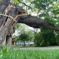 Un arbre qui s'est effondré.