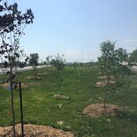 La Ville de Montréal a planté des arbres en bordure de l'avenue Souligny, près de l'autoroute 25.