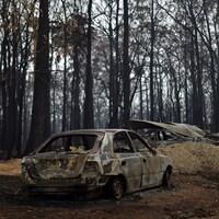 Des voitures carbonisées devant des arbres incendiés.