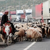 Un fermier avec ses moutons parle à un camionneur assis à l'extérieur.