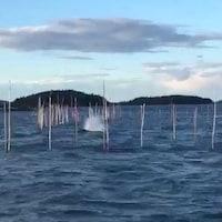 Des piquets sortent de l'eau. On distingue une forme au centre qui semble être un mammifère marin.