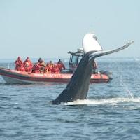 Des gens dans un canot qui observent une baleine.