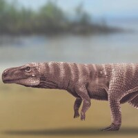Illustration montrant un reptile semblable à un crocodile marchant sur deux pattes.