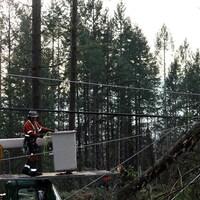 Un ouvrier, dans une nacelle, s'approche d'un tronc d'arbre tombé sur un câble électrique.
