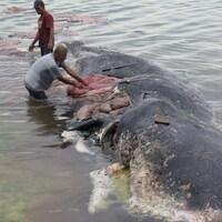 Un cachalot a été retrouvé mort avec 6 kg de plastique dans le ventre en Indonésie.