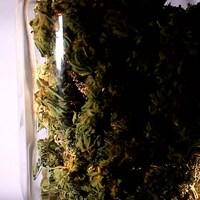 Du cannabis dans un pot.