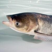 Un poisson.
