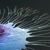 Illustration montrant une cellule cancéreuse du sein.