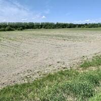 La Municipalité d'Alfred-Plantagenet a fait l'acquisition de cette terre agricole dans l'optique d'y accueillir le projet de centre alimentaire innovateur des CUPR. (Photo Denis Babin)