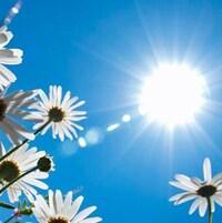 Le soleil brille dans le ciel au-dessus de marguerites.