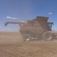 Une moissonneuse dans un champ de blé.